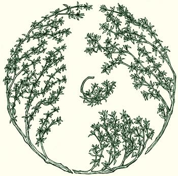 Herbal Healers | Published books | Glennie Kindred